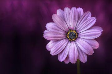 flower-729512_1280